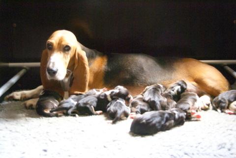 Mère Amande avec ses chiots